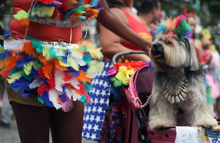 Pets se divertem em bloco de Carnaval Rio