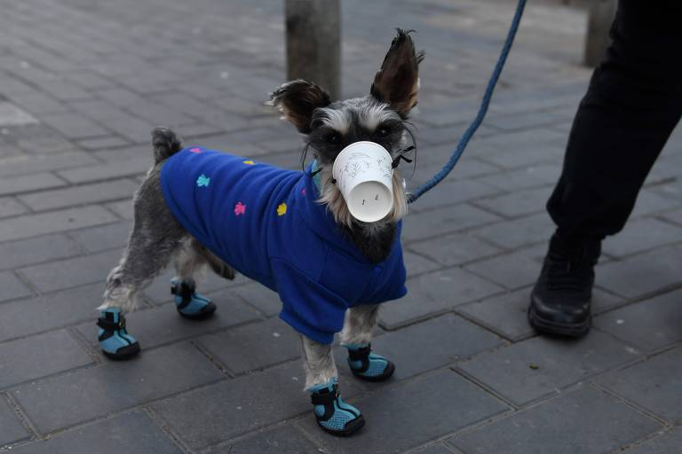 Tutores protegem cães contra coronavírus na Ásia