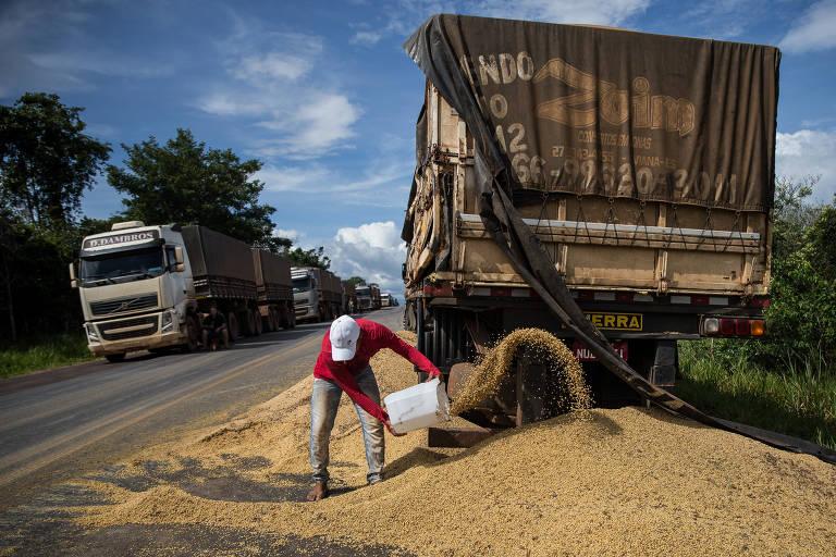Acidente de caminhão na altura do Km 4 da Rodovia BR-163 deixa carga de soja no chão e garotos começam a recolher o produto em troca de gorjeta