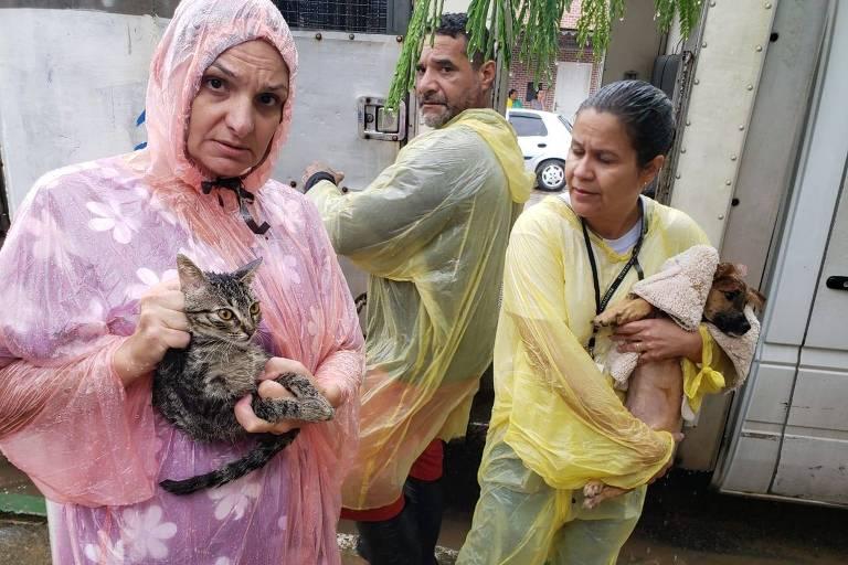 Dez animais foram resgatados de locais inundados em Guarujá, no litoral sul de São Paulo, pelo serviço de proteção animal de Guarujá