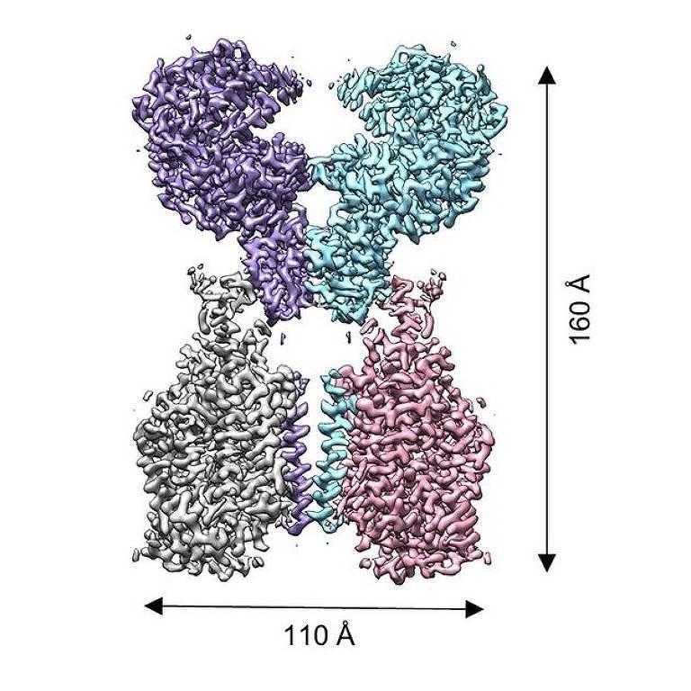 receptor onde vírus se liga