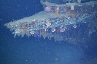 A photo provided by Deep Sea Systems International's Global Explorer ROV and the Bureau of Ocean Energy Management shows marine organisms colonizing the bow of a yacht called Anona, which sank in the Gulf of Mexico in 1944. (Deep Sea Systems International's Global Explorer ROV and the Bureau of Ocean Energy Management via The New York Times)