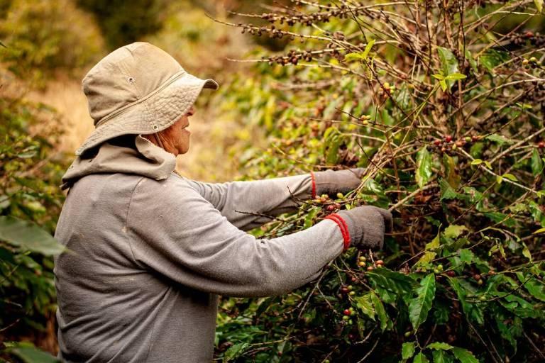 Projeto Mulheres do Café oferece cursos de aperfeiçoamento profissional e pessoal para produtoras do Paraná