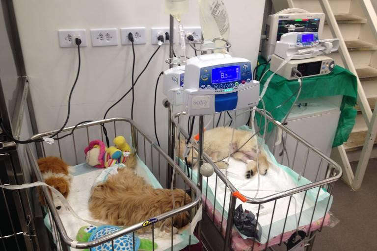 Monitores multiparamétricos usados em clínica veterinária