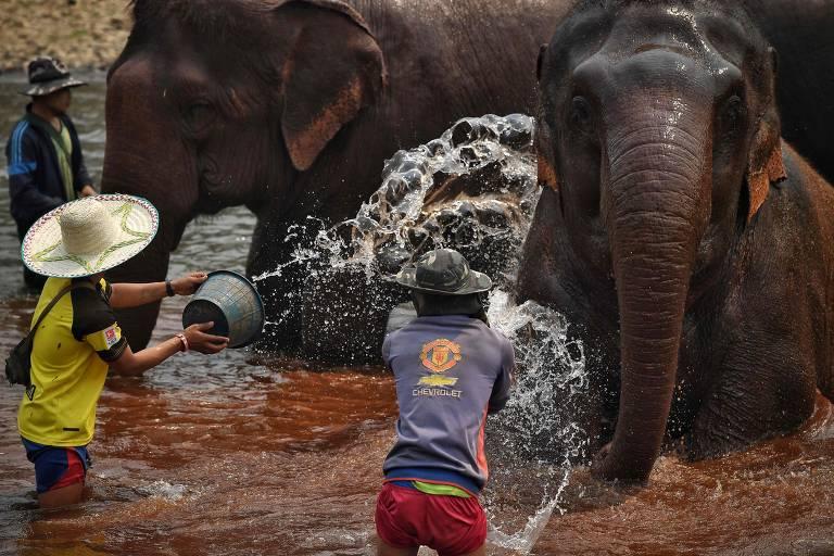 Coronavírus abala turismo e deixa elefantes sem trabalho na Tailândia