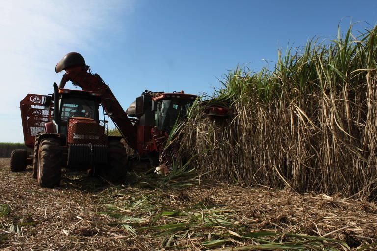 Trator faz colheita de cana-de-açúcar, em Ivinhema (MS)