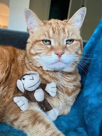 O gato Marley, que tem mais de 60 mil seguidores no Instagram