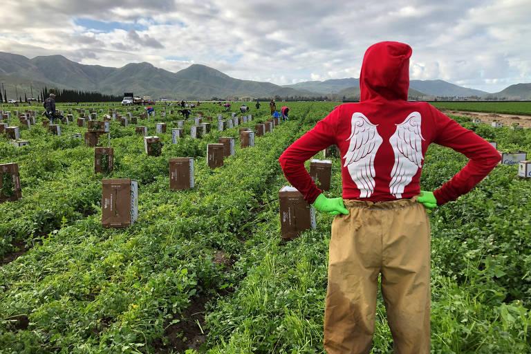 Trabalhador rual trabalha em um campo de coentro na Califórnia, nos EUA, durante a expansão do coronavírus ao redor do mundo