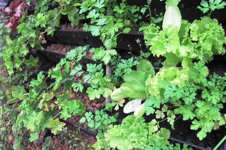 Horta vertical, com vasos