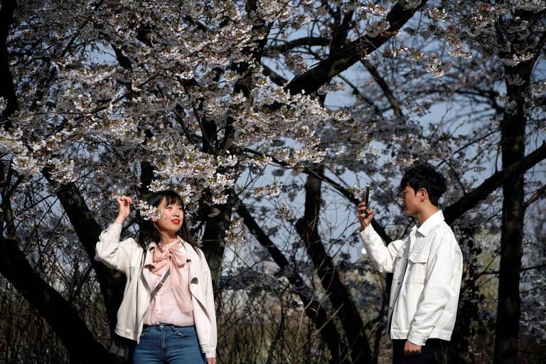 Jovem posa para foto próximo a cerejeita em Seul, capital da Coreia do Sul