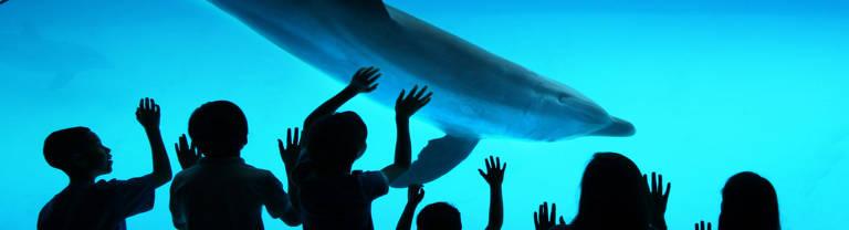 Baía dos Golfinhos no Texas State Aquarium. Todos os nossos golfinhos nasceram em um ambiente protetor e não podem ser liberados na natureza