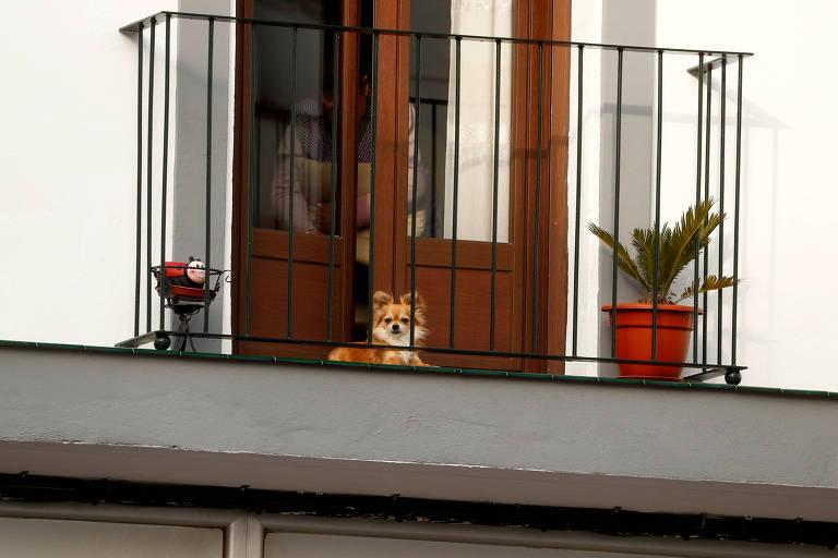 Cachorro na varanda durante a quarentena em Ronda, na Espanha