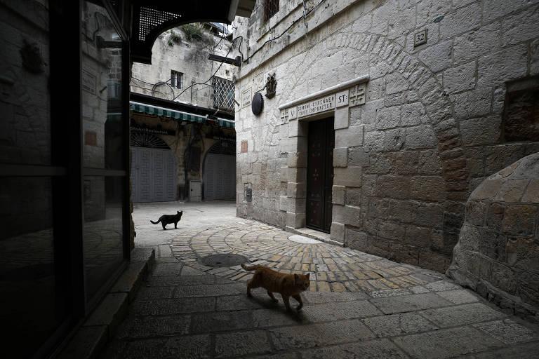 Em Jerusalém, gatos próximos a escultura da Via Dolorosa, vazia devido ao coronavírus