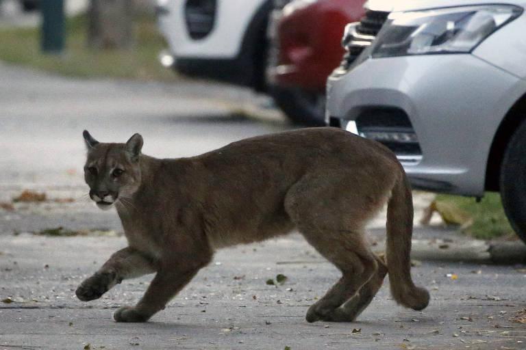 Enquanto humanos estão confinados por coronavírus, animais saem às ruas