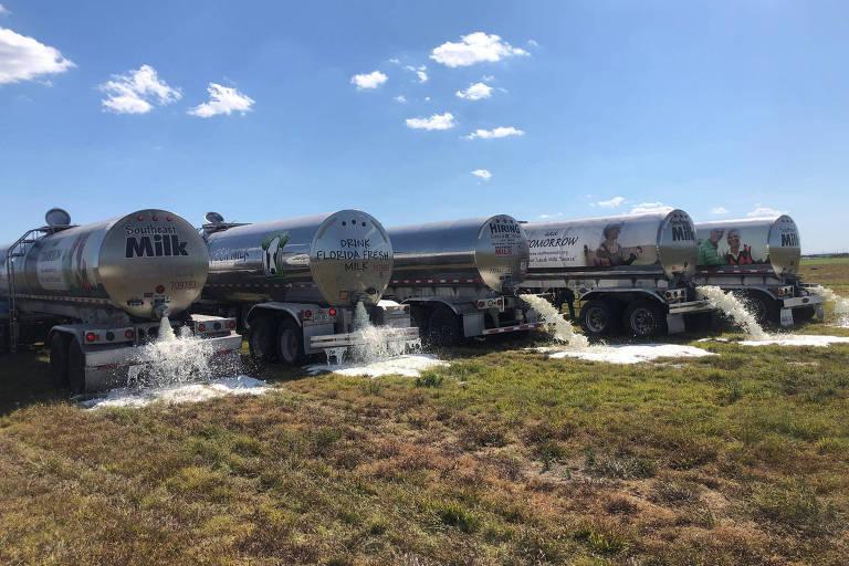 Caminhões tanque despejam leite em um campo de Okeechobee, na Flórida, onde está localizado a fazenda Larson Dairy Inc. uma das principais distribuidoras de leite da região