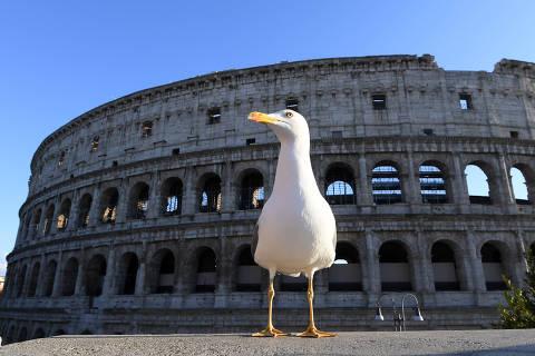 (200308) -- ROMA, 8 marzo, 2020 (Xinhua) -- Imagen del 8 de marzo de 2020 de una gaviota cerca del Coliseo, en Roma, Italia. Un total de 6,387 personas dieron positivo de coronavirus en Italia desde el primer brote epidémico hace dos semanas, informó el Departamento de Protección Civil el domingo. Adicionalmente, 366 personas han fallecido y 622 se han recuperado, dijo el jefe del Departamento de Protección Civil, Angelo Borrelli, a los reporteros en una conferencia de prensa televisada. (Xinhua/Alberto Lingria) (mm) (rtg)