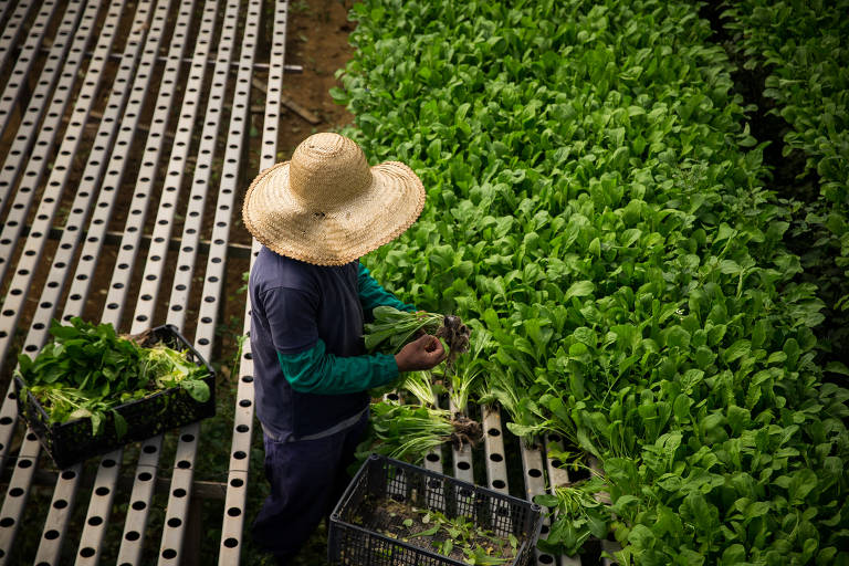 Cinturão verde de São Paulo descarta produtos por falta de demanda