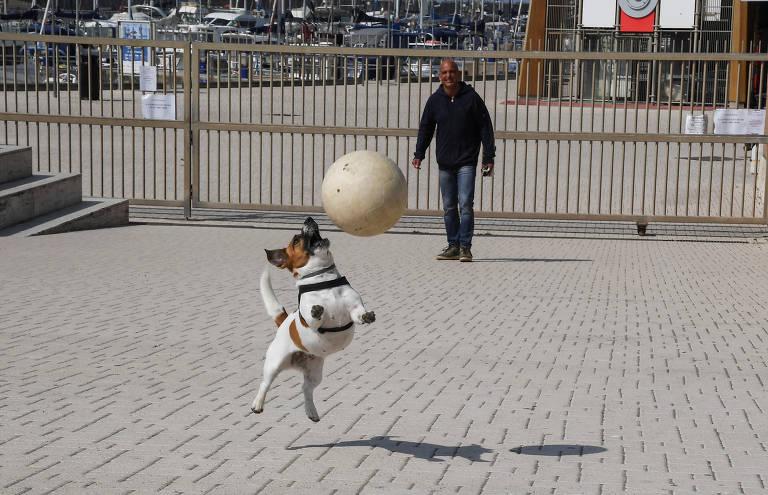 Pets pelo mundo