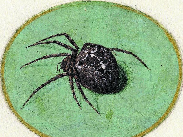 Ilustração de aranha de Jan Augustin van der Goes