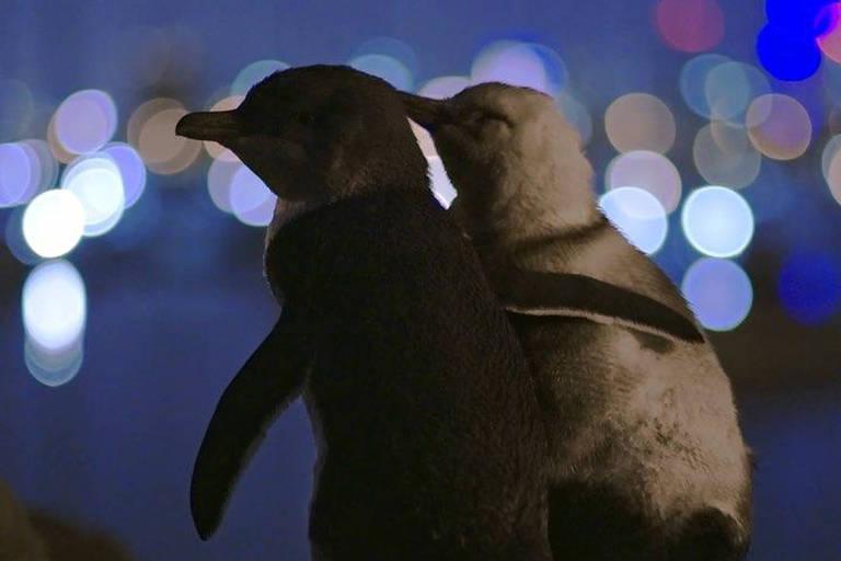 Pinguins abraçados no alto de uma colina