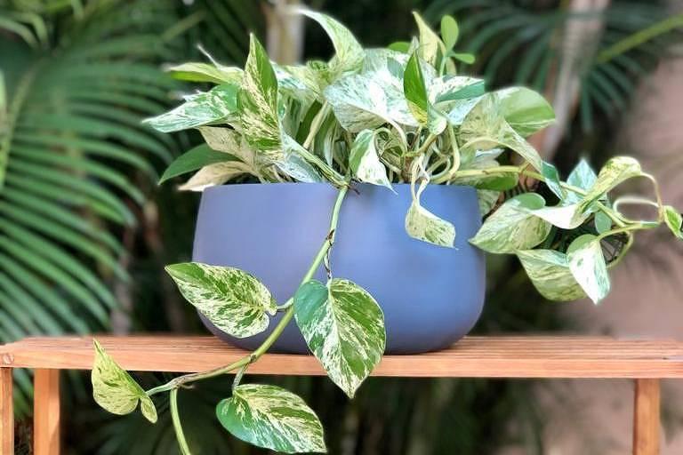 Botânica e Tal entrega plantas no Dia das Mães