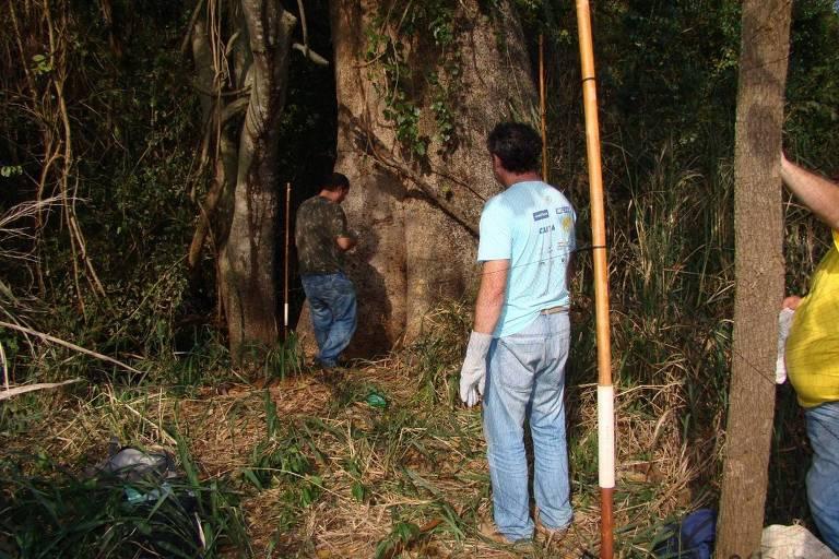 Pesquisadores buscam morcegos no campo para estudar vírus nesses hospedeiros em floresta próximo à Araçatuba, interior de São Paulo.