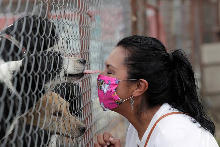 Combate à pandemia separa mais de mil animais de estimação de seus donos