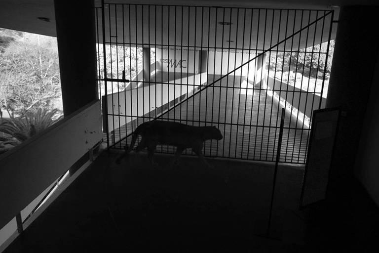 """Imagem da série de filmes na obra """"Barulho de Fundo"""", exposta pela artista Renata Lucas há 14 anos, na Bienal de São Paulo. Uma pantera é flagrada por uma câmera de segurança"""