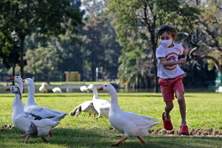 Criança corre atrás de marrecos em parque de Buenos Aires, após oito semanas sem poder sair de casa