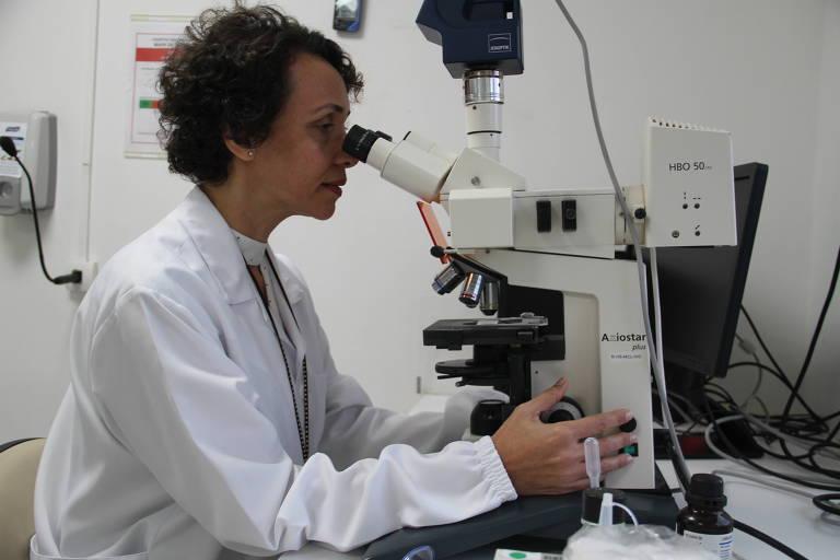 Pesquisadora Kátia Nunes analisa células-tronco na lupa para verificar controle de qualidade em laboratório do Centro de Tecnologia Celular do Instituto D'Or de Pesquisa e Ensino.