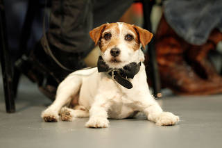 FILE PHOTO: Dog Uggie sits during ceremony where cast and crew of