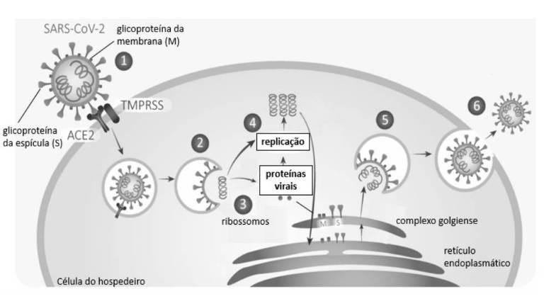 Desenho de ciclo da vida de vírus