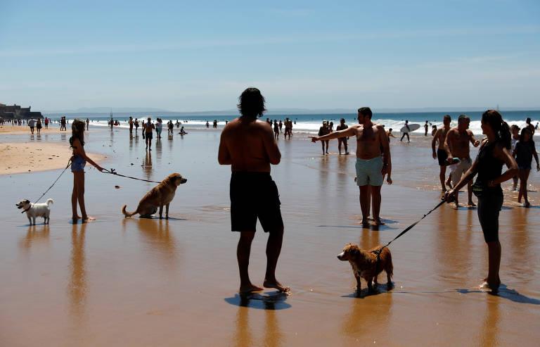 Veja fotos de cães pelo mundo durante o mês de maio