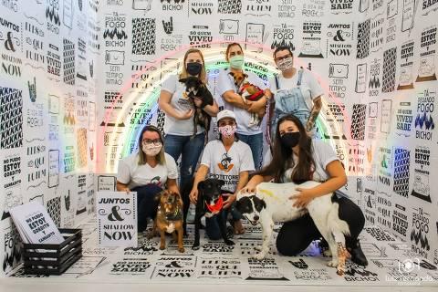 bom pra cachorro - Cães resgatados viram modelos em campanha de adoção