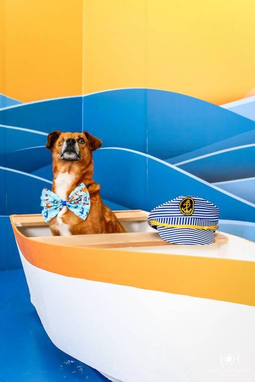 Cães viram modelos em ação para estimular adoção