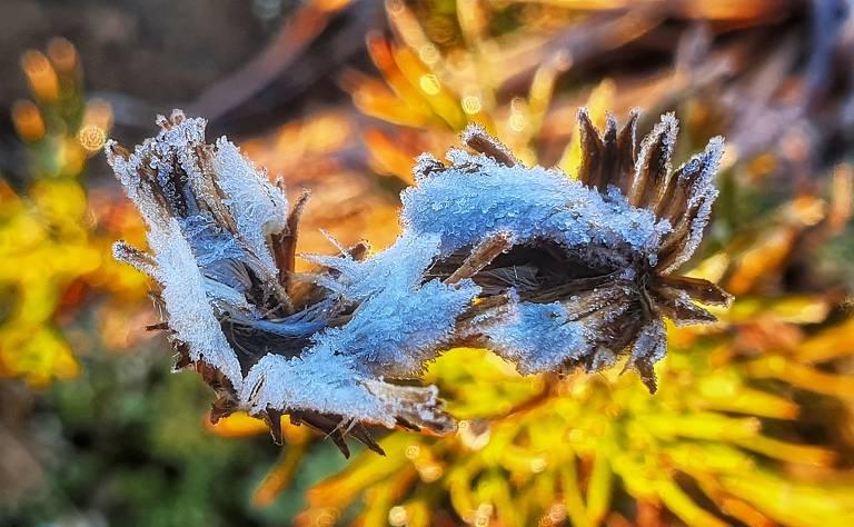 Imagem foca uma folha, cheia de gelo