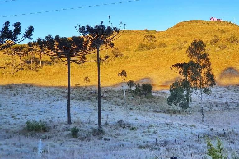 Complexo dos Vinhedos, em São Joaquim, SC, amanheceu coberto de gelo; a temperatura atingiu -6,7º C no amanhecer mais frio do ano