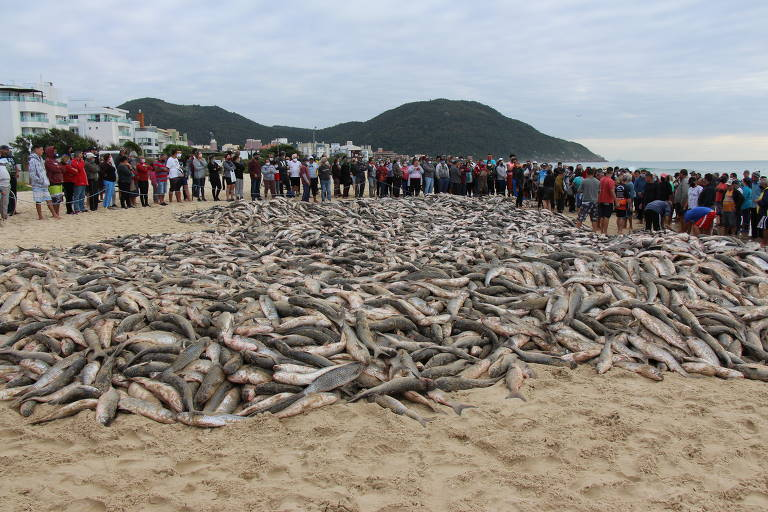 milhares de peixes na areia, enquanto dezenas de pessoas os observam