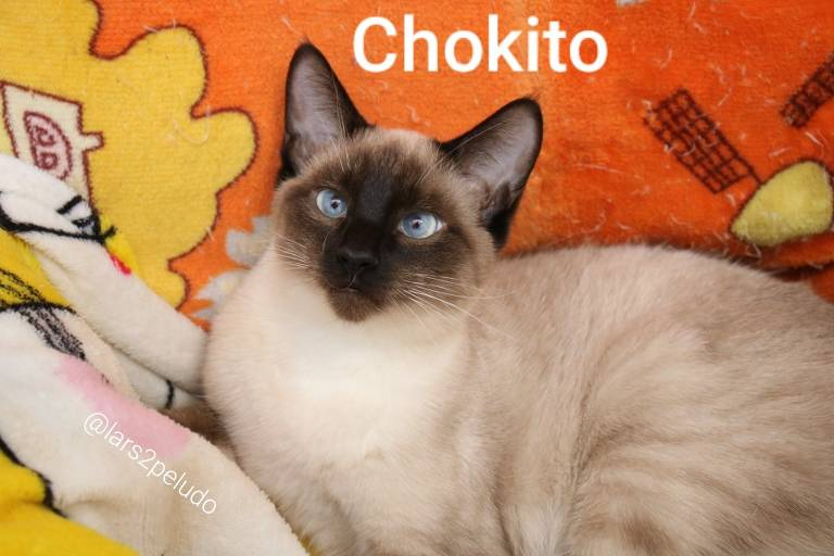 Veja gatinhos disponíveis para adoção no Lar Coração Peludo