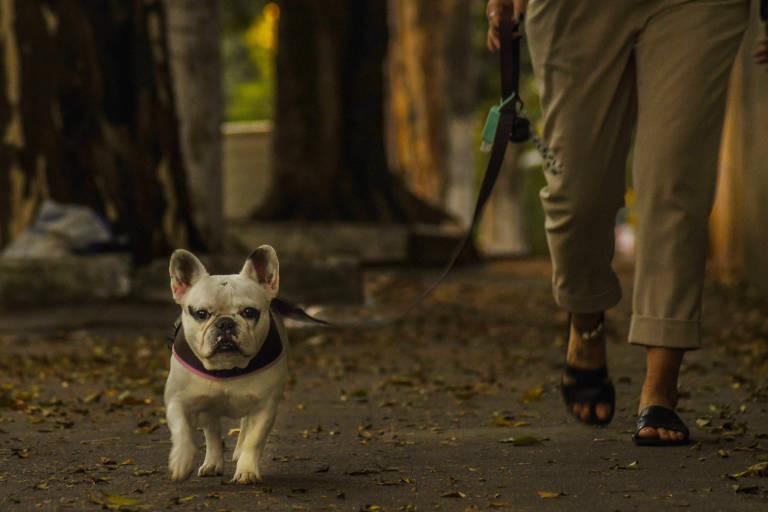 Reportagem flagra passeios de cães e tutoresem SP
