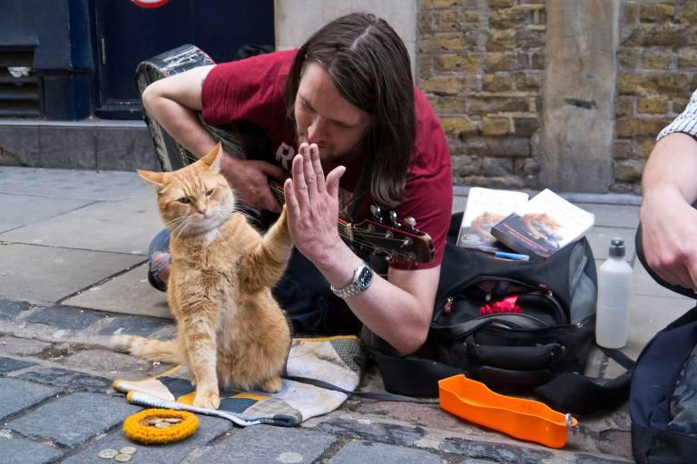 Morre felino que inspirou o livro 'Um Gato de Rua Chamado Bob'