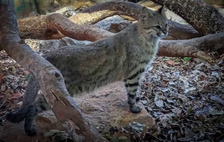 Gato em meio à natureza
