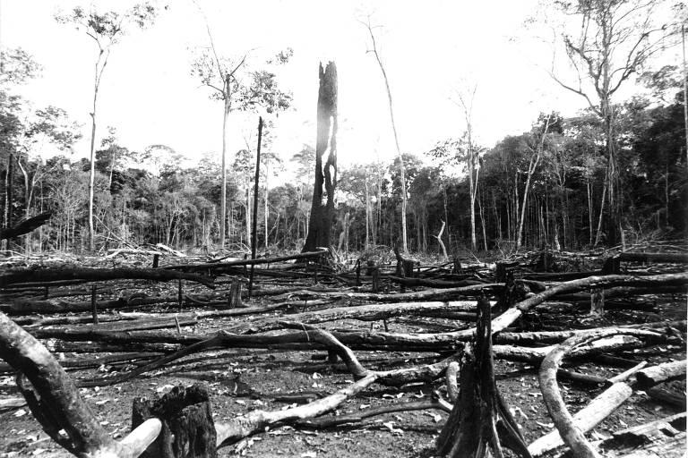 A imagem em preto e branco mostra árvores queimadas e derrubadas para a construção da rodovia Transamazônica em Manaus, no Amazonas, em 1984