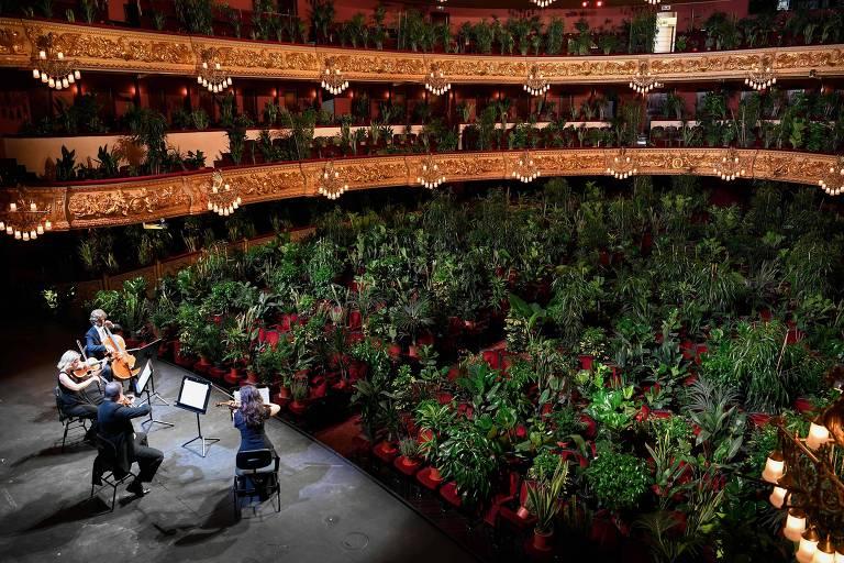 O Uceli Quartet se apresenta para um público feito de plantas durante um show criado pelo artista espanhol Eugenio Ampudia e que será transmitido posteriormente para marcar a reabertura do Grande Teatro Liceu em Barcelona, após o lockdown nacional para impedir a propagação do novo coronavírus.