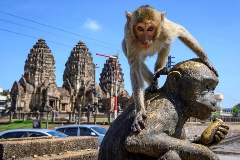 Macaco sobre em estátua em Lopburi, na Tailândia
