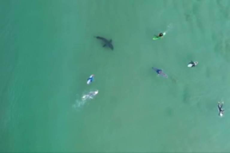 Drone flagra tubarão perto de surfistas