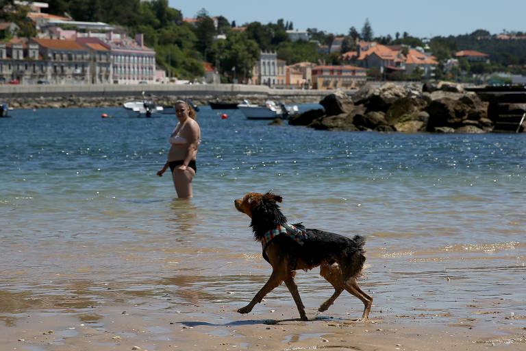 Praia petfriendly