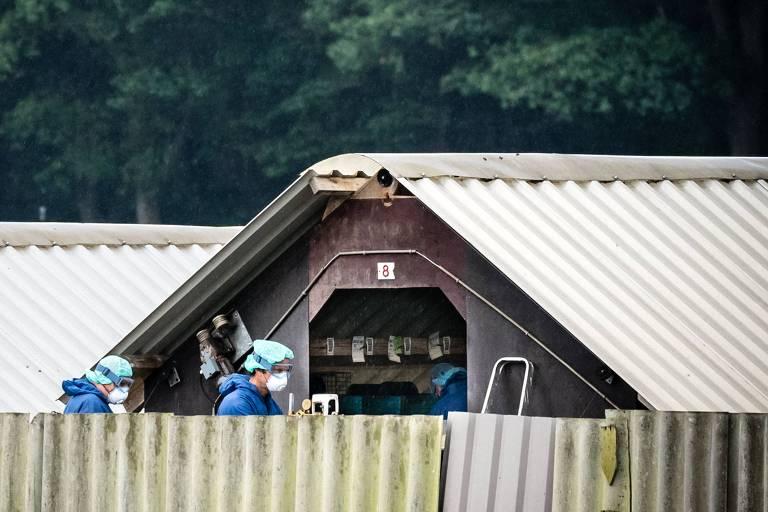 Agentes inspecionam criação de visons em fazenda de Deurne, na Holanda