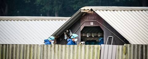 Minks on a farm are culled in Deurne on June 6, 2020, as the Netherlands orders a mass mink cull to stop the spread of the novel coronavirus, COVID-19, outbreak which has been linked to at least two human cases, and which  veterinary epidemiologists believe began from an infected farm worker who introduced the virus to mink, which subsequently spread the virus to other workers. - The cull has hastened the demise of the industry ordered by the Dutch government to cease by 2024 on animal welfare grounds. Farms not infected with the coronavirus have been ordered to implement strict biosecurity and surveillance measures to prevent further spread. (Photo by Rob ENGELAAR / various sources / AFP) / Netherlands OUT ORG XMIT: 413614757