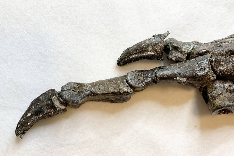 Um novo dinossauro brasileiro